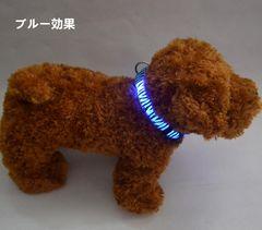 LEDバンド 幅2.5cm 犬 猫 LED首輪 ブルー色 サイズL