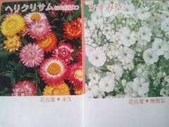 かすみそう&ヘリクリサムの花の種