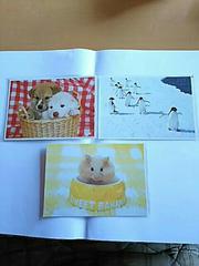 ポストカード わんちゃん ペンギン ハムスター 3枚セット 動物