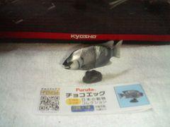フルタ  10周年  日本の動物コレクション    イシダイ♂