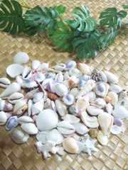 貝殻◆海 南国インテリア 装飾に◆ハワイアン サーフ