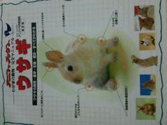 ペット【ウサギ】完全マニュアル