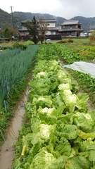 無農薬の野菜セット&新米10�s精米(キヌヒカリ)