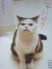猫 とじ込み付録
