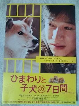 映画「ひまわりと子犬の7日間」チラシ10枚�@ 堺雅人 中谷美紀
