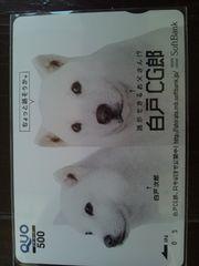 お父さん犬 カイくん 白戸CG郎 クオカード未使用