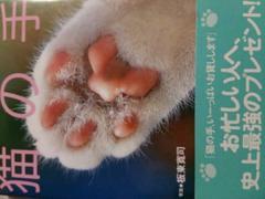 写真集【猫の手】ネコ