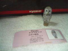 フルタ  日本の動物  クラシック                   フクロウ